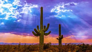 saguaro cactus, north scottsdale, arizona, природа, деревья, saguaro, cactus, north, scottsdale