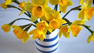 цветы, нарциссы, желтые, весна, букет