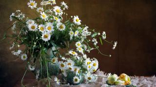 цветы, ромашки, белые, букет