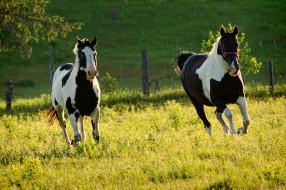 обои для рабочего стола 2048x1365 животные, лошади, кони, луг