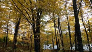 природа, реки, озера, осень, река, деревья