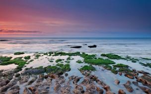 обои для рабочего стола 1920x1200 природа, побережье, море, камни, водоросли, берег, закат, небо