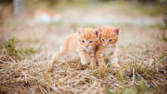 пушистики, животные, коты, котята, комочки, шерсти, няшные, существа, да, и, лучшие, друзья, человека, мур, мяу