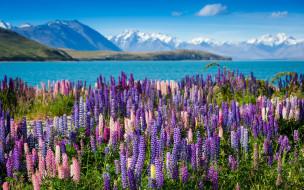люпины, природа, реки, озера, горы, озеро, цветы