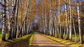 природа, дороги, проселочная, дорога, осень, березы