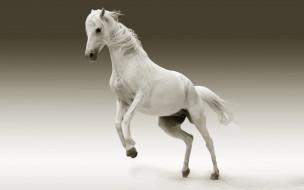 животные, лошади, конь, белый