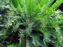 природа, листья, зеленые, куст