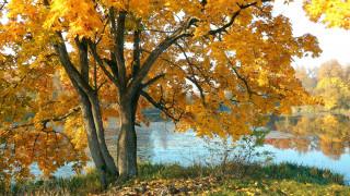 обои для рабочего стола 2048x1152 природа, реки, озера, река, клен, осень, листопад