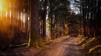 природа, дороги, проселочная, дорога, сосны