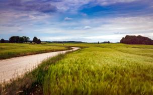 природа, дороги, проселочная, дорога, поля