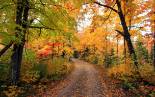природа, дороги, проселочная, дорога, осень, листопад
