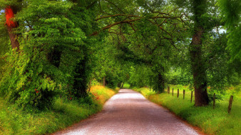 природа, дороги, проселочная, дорога