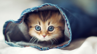 пушистик, животные, коты, котёнок, комочек, шерсти, няшное, существо, да, и, лучший, друг, человека, мур, мяу