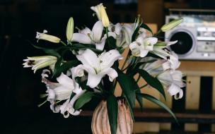 цветы, лилии,  лилейники, букет