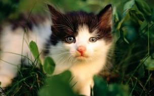 животные, коты, котенок, трава