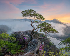 природа, горы, деревья, пейзаж, туман, камни, растительность, сосны, южная, корея