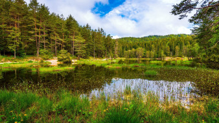 обои для рабочего стола 2048x1152 природа, реки, озера, лес, пруд, трава