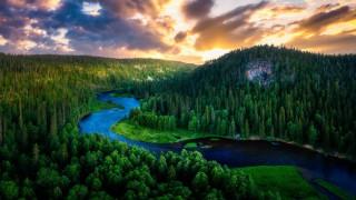 Лес, Лето, Природа, Река