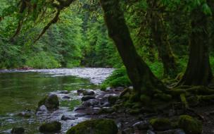природа, реки, озера, деревья, река, камни