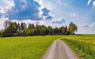 природа, дороги, лето, проселочная, дорога, поле, луг