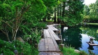природа, реки, озера, деревянный, причал, выше, вода, между, зеленый, деревья, отражение, на, пруду