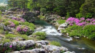 природа, реки, озера, горная, река, камни, цветы