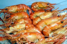 еда, рыбные блюда,  с морепродуктами, креветки