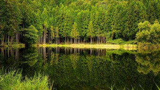 природа, реки, озера, лес, река, отражение