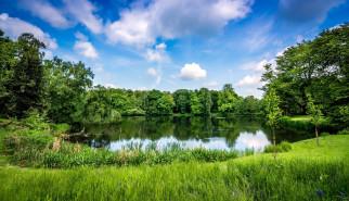 природа, реки, озера, лето, пруд, зелень