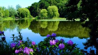 природа, реки, озера, пруд, парк, рододендроны