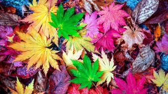 природа, листья, осень, разноцветные