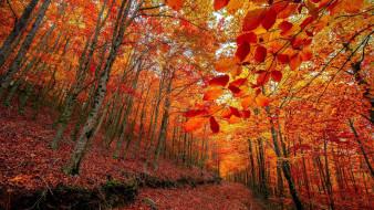 природа, лес, осень, листья, листопад
