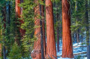 природа, лес, стволы, снег