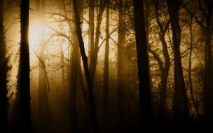 обои для рабочего стола 2560x1600 природа, лес, туман, солнце