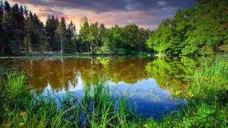 обои для рабочего стола 2560x1440 природа, реки, озера, лес, пруд, камыши