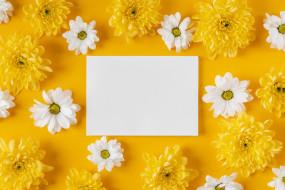 цветы, хризантемы, записка, белые, желтые