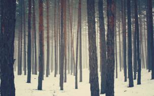 природа, лес, снег, зима