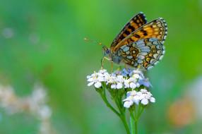 Цветок, Бабочка, Боке