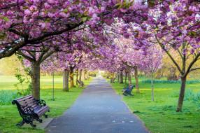 природа, парк, аллея, скамейки, весна