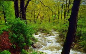 природа, лес, зелень, поток, весна, деревья, река, камни, nature, spring, river, forest, trees, flow