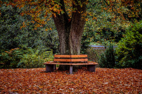 природа, парк, дерево, скамейки, осень, листья, листопад