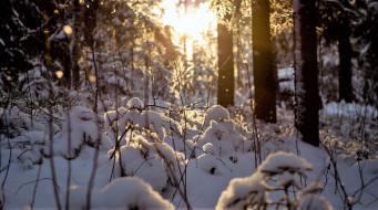 природа, лес, зима, снег