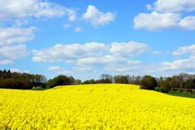 природа, поля, поле