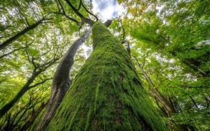 природа, деревья, старое, дерево, ствол, мох