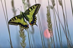 Трава, Природа, Рассвет, Бабочка, Утро, Насекомое