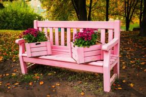 природа, парк, осень, скамейка, хризантемы