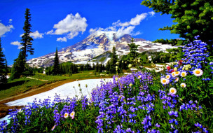 гора, облака, дорога, цветы