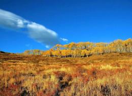 деревья, луг, трава, осень, небо, облако