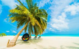 море, пляж, пальма