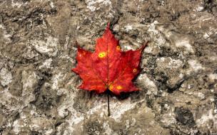 лист, клен, красный, осень